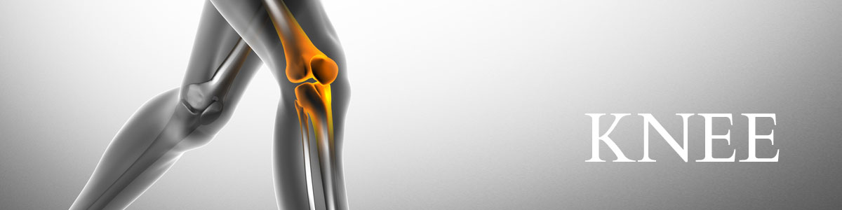 Knee: Anatomy & Function | Robin Orthopaedics Melbourne